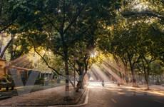 Ngắm con đường đẹp nhất Thủ đô Hà Nội khi vào Thu