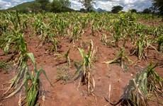 Biến đổi khí hậu: Cảnh báo về nguy cơ mất an ninh lương thực gia tăng