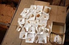 Phát hiện hóa thạch răng sữa cách đây hơn 560.000 năm