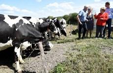 Nông dân Đức kêu gọi chính phủ trợ cấp đặc biệt vì thất bát
