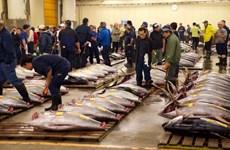 [Video] Chợ cá Tsukiji: Dấu chấm hết cho một biểu tượng của Nhật