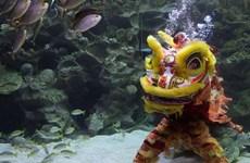[Video] Độc đáo nghệ thuật múa lân dưới nước ở Malaysia