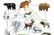Suy thoái đa dạng sinh học đe dọa chuỗi cung ứng thực phẩm toàn cầu