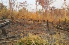 Gia Lai: Khởi tố vụ án phá gần 5 ha rừng tại huyện Ia Grai