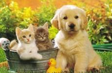 Ngắm nhìn thú cưng giúp người lớn tuổi cải thiện sức khỏe