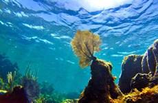 ADB khởi động Kế hoạch hành động vì các đại dương Xanh