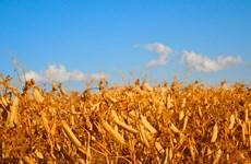 Mất mùa ảnh hưởng tới hàng triệu người dân Trung Mỹ