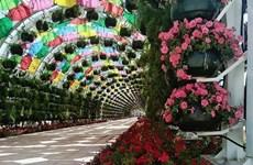 [Video] Ngỡ ngàng cảnh hoa phủ đầy công trình công cộng ở Qatar