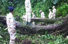 Ít nhất 7 người thiệt mạng trong vụ tấn công tại Đông Bắc Ấn Độ
