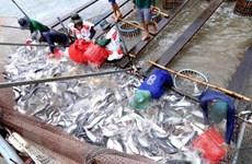 Nông dân Đồng Tháp lo lắng do giá cá tra có xu hướng giảm mạnh