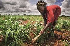AfDB và Hàn Quốc tăng cường hỗ trợ ngành nông nghiệp châu Phi