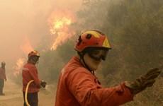 """Hơn 1.000 lính cứu hỏa vật lộn với """"giặc lửa"""" tại Bồ Đào Nha"""