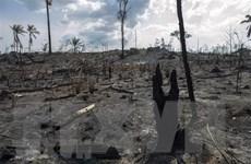 Các nước Nam Mỹ sẽ nhóm họp nhằm vạch ra chính sách bảo vệ rừng Amazon