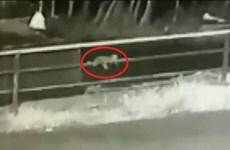 [Video] Bé 1 tuổi sống sót thần kỳ sau khi rơi khỏi xe ôtô đang chạy