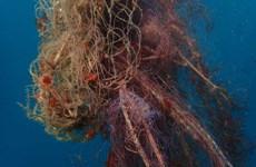 [Video] Chiến dịch 'săn bắt' lưới hoang ngoài biển Phần Lan