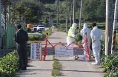 Hàn Quốc phát hiện ca nhiễm dịch tả lợn châu Phi đầu tiên