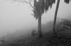 [Video] Làn sương mù kỳ ảo ở thành phố Hannover của Đức