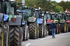 [Video] Nông dân Pháp bày tỏ thất vọng do sản xuất nông nghiệp ảm đạm