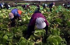 Hàn Quốc bảo vệ ngành nông nghiệp sau khi từ bỏ đặc quyền tại WTO