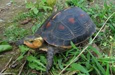 Nhật Bản: Hơn 60 con rùa quý hiếm bị đánh cắp từ vườn thú