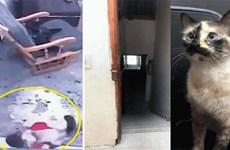 [Video] Chú mèo thông minh cứu em bé thoát cú ngã cầu thang