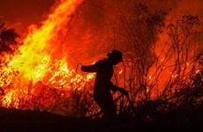 Indonesia buộc các công ty gây cháy rừng bồi thường 22,5 tỷ USD