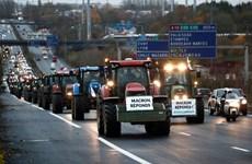 Nông dân Pháp biểu tình phản đối chính sách nông nghiệp