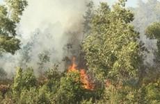 Vụ cháy rừng ở Uông Bí: Thiệt hại khoảng 30ha rừng thông và keo