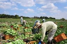 Ibaraki–Điểm đến ưa thích của các thực tập sinh nông nghiệp Việt Nam