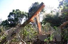 [Photo] Hiện trường các vụ chặt phá rừng ở Lâm Đồng và Đăk Nông