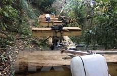 Kon Tum: Phát hiện thêm 2 đối tượng đang khai thác gỗ tại Đăk Tô