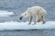 Nguy cơ nhiều sinh vật tuyệt chủng do ấm lên toàn cầu