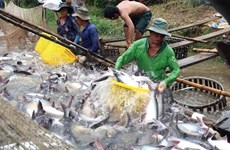 Mặt hàng cá tra chinh phục người tiêu dùng trong nước