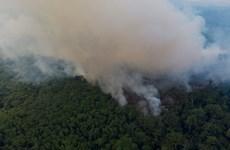 Báo động cháy rừng ở Brazil tăng so với cùng kỳ năm ngoái