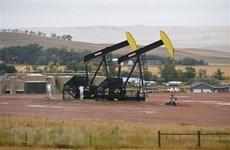 Giá dầu thế giới đi xuống sau khi IEA hạ dự báo nhu cầu tiêu thụ