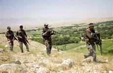 Afghanistan tiêu diệt gần 50 phiến quân Taliban ở miền Bắc