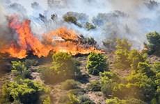 Hy Lạp: Cháy rừng lớn ở chân núi Imitos, ngoại ô thủ đô Athens
