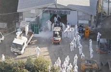 Nhật Bản nỗ lực ngăn chặn dịch cúm gia cầm lây lan rộng