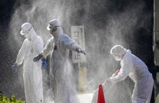 Dịch cúm gia cầm đã lây lan tại 12 tỉnh của Nhật Bản