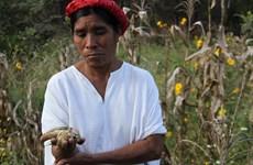 Hơn 7 triệu người Trung Mỹ trong tình trạng khủng hoảng lương thực