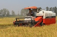 Gần 1.000 tỷ đồng cho vay ưu đãi phát triển nông nghiệp
