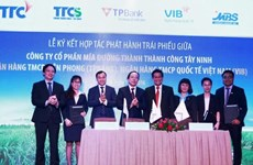 TPBank, VIB đầu tư trái phiếu vào Mía đường Thành Thành Công Tây Ninh