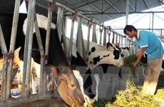 Vốn trung và dài hạn cho phát triển chăn nuôi đang thiếu và yếu