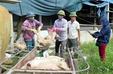 """""""Lợn bệnh hóa lợn rừng, ủy ban xã cách vài chục mét vẫn đổ quanh"""""""