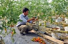 Agribank cho vay 5.108 tỷ đồng phát triển nông nghiệp công nghệ cao