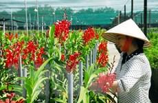 Khách hàng vay phục vụ nông nghiệp sẽ được tăng gấp đôi hạn mức
