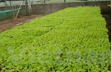 Ngân hàng VietinBank đồng hành cùng nông nghiệp sạch Việt Nam