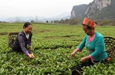 Hộ cận nghèo vùng dân tộc được nâng vốn vay phát triển kinh tế
