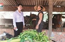 Kienlongbank giảm 50% lãi suất cho vay tại Đà Nẵng, Quảng Nam, Đăk Lăk