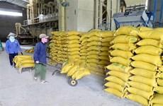 NHTM hỗ trợ doanh nghiệp, thu mua thóc gạo tại Đồng bằng sông Cửu Long